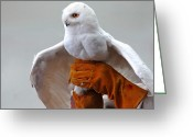 Snowy Night Greeting Cards - Message Snowy Owl Greeting Card by LeeAnn McLaneGoetz McLaneGoetzStudioLLCcom