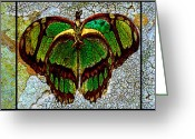Most Favorite Photo Greeting Cards - Metamorphic Muse Greeting Card by Fine Art  Photography