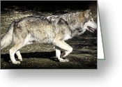 Barry Styles Greeting Cards - Mexican Grey Wolf 3819 Greeting Card by Barry Styles