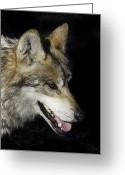 Barry Styles Greeting Cards - Mexican Grey Wolf 3827 Greeting Card by Barry Styles