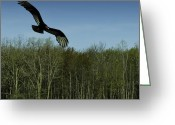 Buzzard Wings Greeting Cards - Michigan Buzz Greeting Card by LeeAnn McLaneGoetz McLaneGoetzStudioLLCcom
