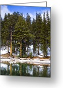 Winter Trees Greeting Cards - Mid Day Melt Greeting Card by Chris Brannen
