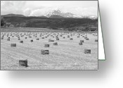Meeker Greeting Cards - Mid June Colorado Hay  and the Twin Peaks Longs and Meeker BW Greeting Card by James Bo Insogna