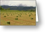Meeker Greeting Cards - Mid June Colorado Hay  and the Twin Peaks Longs and Meeker Greeting Card by James Bo Insogna