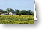 Buttercups Greeting Cards - Midland Greeting Card by JC Findley