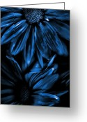 Hues Greeting Cards - Midnight Blue Gerberas Greeting Card by Bonnie Bruno