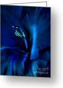 Blue Florals Greeting Cards - Midnight Blue Gladiola Flower Greeting Card by Jennie Marie Schell