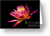 Aquatic Flower Greeting Cards - Midnight Lily Greeting Card by Julie Palencia