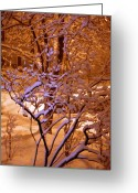 Snowy Night Greeting Cards - Midnight Snow Greeting Card by Ellen Andrews