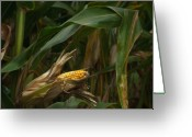 Leave Greeting Cards - Midwest Harvest Greeting Card by Steve Gadomski