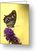 Gossamer Greeting Cards - Mighty Malachite Butterfly Greeting Card by Sabrina L Ryan