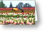 Migrant Greeting Cards - Migrant Workers in the Tulip Fields Greeting Card by Margaret Hood