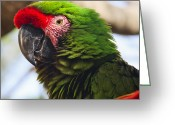 Sea Animal Greeting Cards - Military Macaw Parrot Greeting Card by Adam Romanowicz