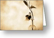 Black And White Flower Greeting Cards - Milk Weed In A Bottle Greeting Card by Bob Orsillo
