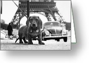 Tour Greeting Cards - Milo mon Chien Greeting Card by Hans Mauli