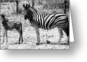 Black And White Animal Greeting Cards - Mimic Greeting Card by Andrew Paranavitana