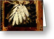 Nature Collage Greeting Cards - Mimosa Leaf Collage Greeting Card by Ann Powell
