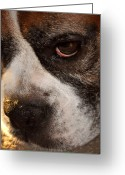 Dog Prints Photo Greeting Cards - Mind Reader Greeting Card by John Knapko