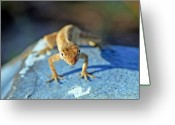 Lizard Greeting Cards - Mini Attitude Greeting Card by Kenneth Albin