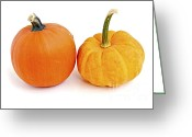 Thanksgiving Greeting Cards - Mini pumpkins Greeting Card by Elena Elisseeva