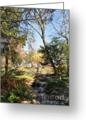Cheekwood Gardens Greeting Cards - Mini-Waterfall Greeting Card by Denise Ellis