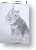 Mini Drawings Greeting Cards - Miniature Schnauzer Greeting Card by Kimberly Smith