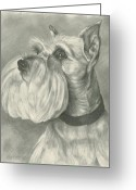 Mini Drawings Greeting Cards - Miniature Schnauzer Greeting Card by Lena Auxier