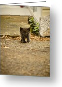 Vet Photo Greeting Cards - Miniature Stalker Greeting Card by Heather Applegate