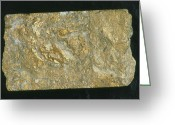 Sample Greeting Cards - Mining Drill Core Sample With Gold Content Greeting Card by Kaj R. Svensson