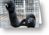 Black Fur Greeting Cards - Mink Fur Farm Greeting Card by Ria Novosti