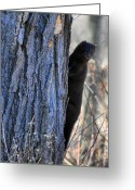 Mink Greeting Cards - Mink In A Tree Greeting Card by Emily Stauring