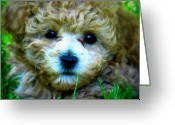 Puppies Greeting Cards - Minnie Greeting Card by Mg Rhoades