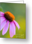 Stamen Greeting Cards - Miraculous Greeting Card by Charles Dobbs