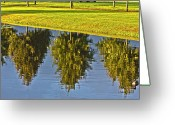 Lake Park Greeting Cards - Mirroring Trees Greeting Card by Heiko Koehrer-Wagner