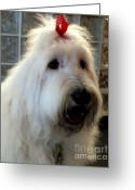 Bows Greeting Cards - Miss Daisy May Greeting Card by Karen Wiles