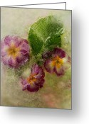 Primrose Greeting Cards - Missing Mother Greeting Card by Carmen Moise