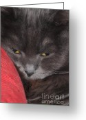 Blue Cat Greeting Cards - Missing You Greeting Card by Joann Vitali