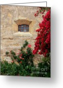 Bougainvillea Greeting Cards - Mission Window Greeting Card by Carol Groenen