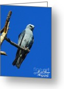 Mississippi County Greeting Cards - Mississippi Kite Greeting Card by Barbara Bowen