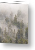 U.s. National Forest Greeting Cards - Mist In Tongass National Forest Greeting Card by Matthias Breiter