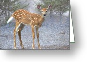Marty Koch Greeting Cards - Misty Fawn Greeting Card by Marty Koch