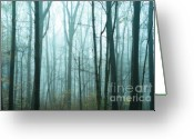 Forbidding Greeting Cards - Misty Forest Greeting Card by John Greim