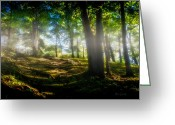 Restful Greeting Cards - Misty Morning Greeting Card by Bob Orsillo