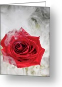 Red Orchid Blooms Greeting Cards - Misty Rose Greeting Card by Jim DeLillo
