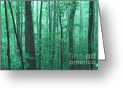 Webster County Greeting Cards - Misty Summer Woods Greeting Card by Thomas R Fletcher