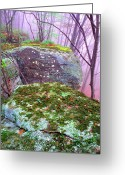 Lichen Greeting Cards - Misty Woodland Scenic Greeting Card by Thomas R Fletcher