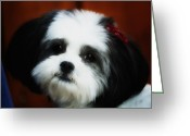 Lapdog Greeting Cards - Mitzy Greeting Card by Linda Tiepelman