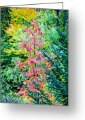 Red Fall Colors Greeting Cards - Mixed Colors In The Middle Greeting Card by James Steele