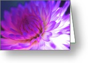 Featured Artwork Prints Greeting Cards - Mod Dahlia Greeting Card by Kathy Yates