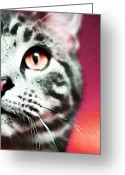 Kitty Digital Art Greeting Cards - Modern Cat Art - Zebra Greeting Card by Sharon Cummings